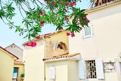 开花的灌木的分支在舒适庭院里 免版税库存照片