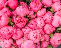 开花的牡丹花束  库存照片