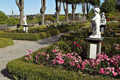 开花的玫瑰色花圃在夏天城市公园 图库摄影