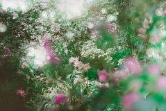 开花的玫瑰,红色花在公园在一个明亮的晴天 免版税库存图片