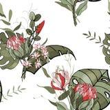 开花的现实被隔绝的密林植物,棕榈 手拉的明亮的例证 热带兰花,普罗梯亚木传染媒介无缝的花 皇族释放例证