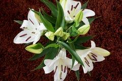 开花的白百合花束  库存图片