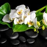 开花的白色兰花花的美好的温泉概念 免版税库存图片