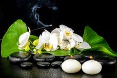 开花的白色兰花花的美好的温泉概念;phalaenop 免版税图库摄影