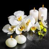 开花的白色兰花花, phalae美丽的温泉静物画  免版税图库摄影