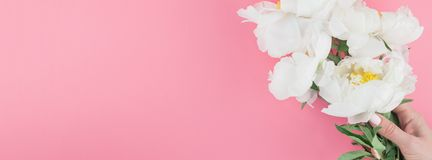 开花的白色牡丹花 库存图片