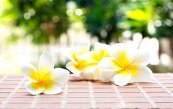 开花的白色羽毛或赤素馨花在砖地板上开花 库存图片