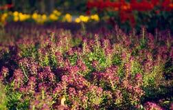 开花的秋天庭院在清早 库存图片