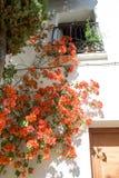 开花的窗口 库存图片