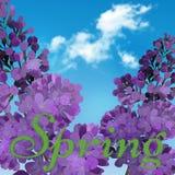 开花的紫罗兰色淡紫色花-与青天空的花卉背景 图库摄影