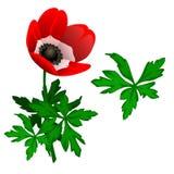 开花的红色Tulipan和叶子 向量 图库摄影