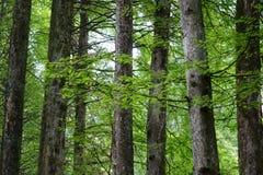 开花的线路春天结构树 图库摄影