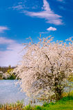开花的结构树和好的湖在春天之前。 库存照片
