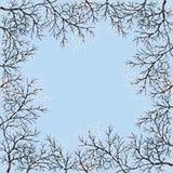 开花的结构树和蓝天 免版税库存照片