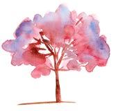 开花的结构树 免版税库存照片
