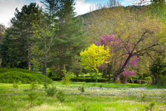 开花的结构树 免版税图库摄影