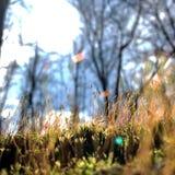 开花的绿色叶子草花,居住的自然自然 免版税库存照片