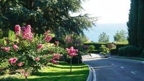 开花的胡同在疗养院的公园 库存照片