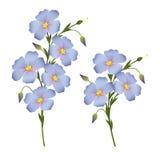 开花的胡麻,标签的设计元素, packagi小树枝  皇族释放例证