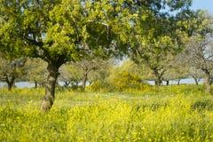 开花的自然在春天 免版税库存图片