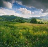 开花的花、夏天草甸山的和蓝色多云天空的全景 库存图片