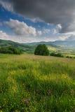 开花的花、夏天草甸山的和蓝色多云天空的看法 免版税库存照片