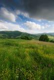 开花的花、夏天草甸山的和蓝色多云天空的看法 免版税库存图片