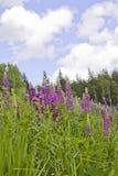 开花的花和草关闭反对领域和森林和天空 免版税库存图片