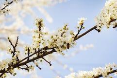开花的花在一个春日 免版税库存照片