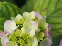 开花的花在宏观方式下 免版税库存照片