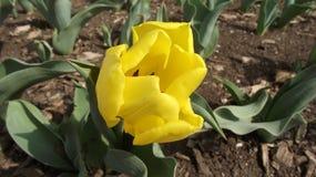 开花的花在春天 库存照片