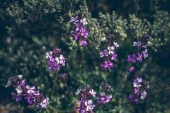 开花的花在有非常浅焦点的春天 库存图片