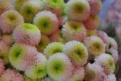 开花的花束 库存图片