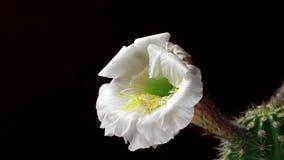 开花的花构成 股票视频