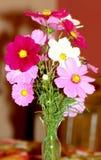 开花的花瓶 库存图片