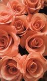 开花的花花束 库存照片
