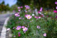 开花的花 免版税图库摄影