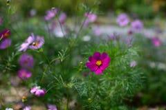 开花的花 库存照片