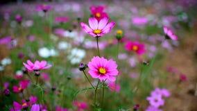 开花的花 库存图片