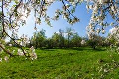 开花的苹果和蓝天分支的框架  图库摄影