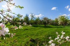 开花的苹果和蓝天分支的框架  库存图片