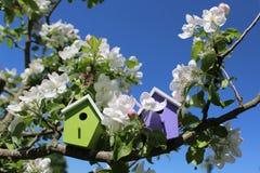 开花的苹果树的鸟房子 免版税库存照片