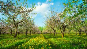 开花的苹果树,与起重机的定期流逝 影视素材