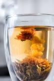 开花的茶 库存图片