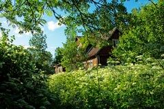 开花的草丛林在夏天庭院里 免版税库存图片
