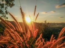 开花的草和日出 免版税库存照片