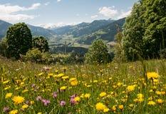 开花的草甸在夏天 免版税图库摄影