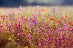 开花的草甸在春天 图库摄影