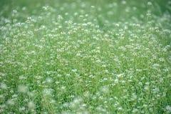 开花的草甸花 库存图片