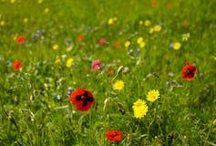 开花的草甸 库存图片